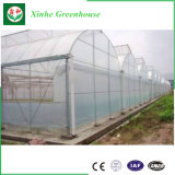 Invernadero Anti-ULTRAVIOLETA galvanizado palmo multi de la película plástica