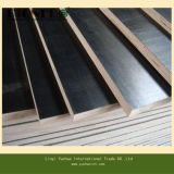 Construction를 위한 Competitive Price에 까만 Film Faced Plywood