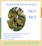 20:1 natural do 10:1 do pó do extrato da haste de Akebia