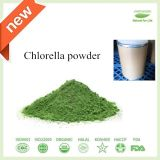 Ernährungs- und diätetisches Ergänzungs-Chlorella-Puder