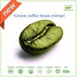 Estratto verde senza grasso del chicco di caffè