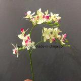 Siamesische Orchideephalaenopsis-Orchideencymbidium-künstliche Blumen-künstliche rote Orchidee-Pflanzenkünstliche Orchidee for Australien