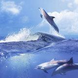 3D壁の海の世界の背景の販売のためのNano床タイル