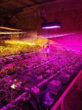 LED de poupança de energia de iluminação LED hidrop ico de plantas a crescer a luz para a agricultura Project