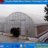 상업적인 큰 크기 수경법 토마토를 위한 유리제 녹색 집