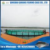 Compartimento para a piscicultura, gaiola flutuante para tilápia Peixe