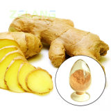 Extrait Gingerol (CAS de fond de gingembre : 23513-14-6)