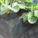 100gx 1X10m 까만 잡초 방제 직물 또는 반대로 잔디 피복