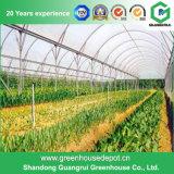 Solo invernadero agrícola del túnel de la película plástica del palmo