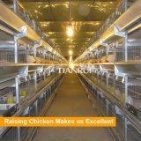 Batterie de type H poulette l'élevage du poulet pour le jour de la cage de Vieux poulet