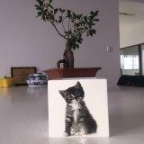 Film de transfert de chaleur le chat pot de fleurs