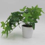 Petite plante artificielle Bonsai le lierre commun pour le ministère Deccoration