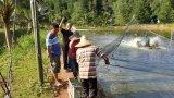 Additief van het Voer van Unigrow het Microbiële voor Shirmp, Vissen, Krab en het Fokken Talipia