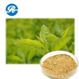 El polifenol del té de la medicina para reduce la presión arterial