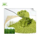 Poudre 100% organique organique de jus de Wheatgrass, poudre d'herbe de blé, herbe déshydratée de blé