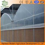 Serre chaude en plastique agricole/commerciale la meilleur marché