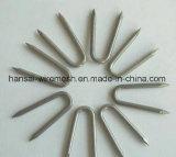 Гальванизированный U-Тип ногти для здания