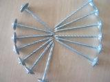 De gegalvaniseerde Spijker van het Dakwerk van de Paraplu Hoofd