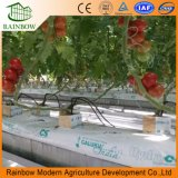 Película de plástico de venda superior de gases com efeito de estufa/ Turquia para tomate