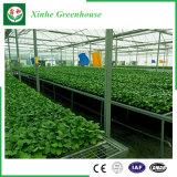 Serra di verdure del film di materia plastica del fiore di agricoltura