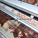 тип клетка цыпленка цыплятины для курочки бройлера слоя