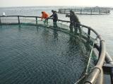 Anti vent de mer profonde cultivé pêchant la cage