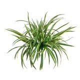 Piante di alta qualità e fiori artificiali Bush di Gu-Hs-Ym-4br-Gn
