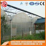 Serre chaude en plastique de résistance de vent de la Chine en à l'extérieur ventes de serre chaude de jardin de porte