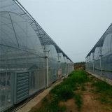 중국 고추를 위한 직업적인 플레스틱 필름 녹색 집