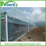 Plantation de tomates Multi-Span Tunnel Green House