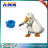 Poultry Management를 위한 UHF RFID Animal Tags Livestock Foot Ring