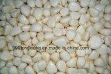 Alta calidad industrial de alta eficiencia de ajo / chalota Peeler