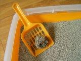 Original Color Dust Katze王のなしのベントナイト猫は散らかる6.35kg