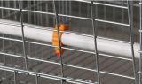 Ei-Legehenne-Maschendraht-Rahmen für Verkauf (A3L120)