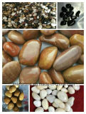 2-3cm Polido Preto Multicolor Afogarem Natural &Pebble Stone