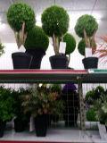 Migliore albero artificiale di vendita Gu-Jm-2ball-Boxwood di Woodbox