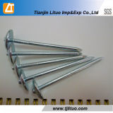 Unbrella Head Galvanized Twisted / Plain Shank Roofing Nails
