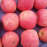 Qualität von frischem rotem FUJI Apple
