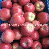 중국 진한 빨강색 신선한 Apple