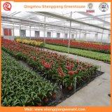 꽃을%s 농업 또는 상업적인 플레스틱 필름 정원 온실