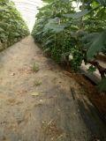 Afloje la calidad del suelo con el mejoramiento del suelo Unigrow