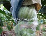 Tessuto non tessuto di Polypropelyne Spunbond per il coperchio agricolo non tessuto della pianta del tessuto