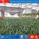 Keda Vegetable Seeds Greenhouse for Dirty