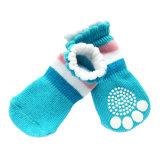 Bordo bello del merletto che lavora a maglia gli anti pattini del cane di pattino ed i calzini del cane