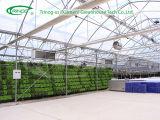 판매를 위한 양상추 Hydroponics Growing System