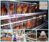 Gaiola de frangos de corte automática em casa de aves com baixo preço