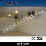Холодильные установки, холодный замораживатель для консервации (около -18 степени c)