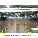 Strumentazione utilizzata pollo automatico dell'azienda avicola di prezzi di fabbrica per la griglia