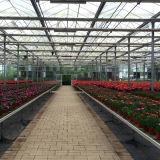 꽃을%s 최신 판매 농업 다중 경간 유리제 온실