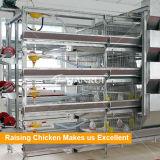 H tapent la poulette automatique de cage de poulet soulevant le matériel